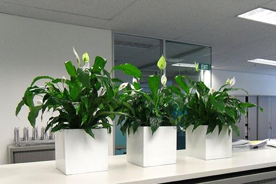 cây xanh giúp văn phòng dễ chịu hơn